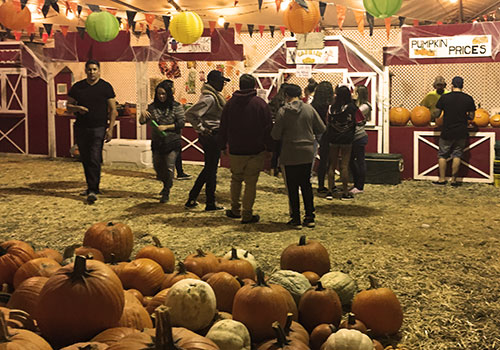 Fall Festival,Pick Your Own Pumpkin Patch, Corn Maze, And Wagon Rides At ...