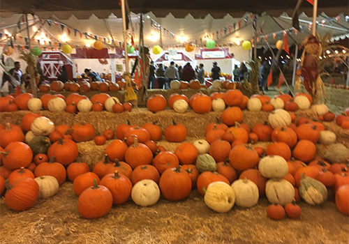 ... Fall Festival,Pick Your Own Pumpkin Patch, Corn Maze, And Wagon Rides At